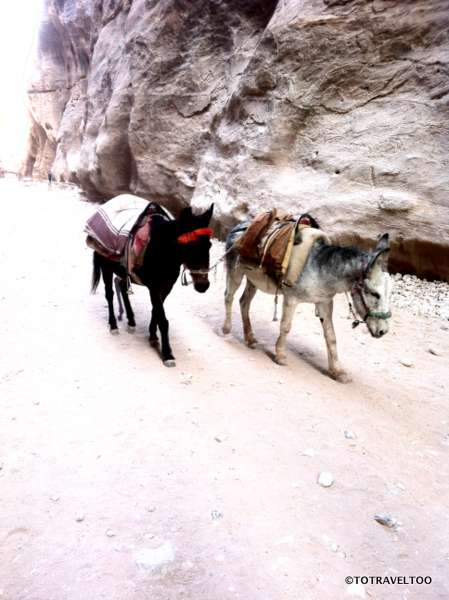 Air-conditioned donkeys in Petra