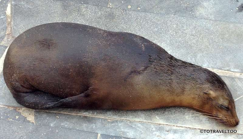 I'm a bit sleepy after dinner ssshhh don't wake the locals on Galapagos Islands