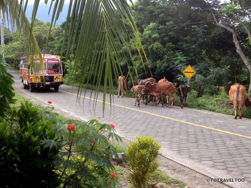 Traffic Jams on Ometepe Island